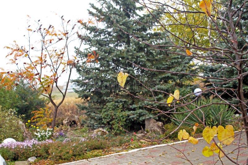 Träd i nedgången Guld- höst royaltyfri foto