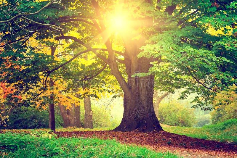 Träd i parkera på solnedgången royaltyfria bilder