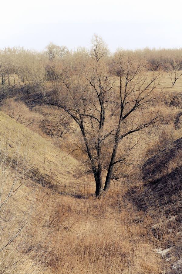 Träd i ravin arkivfoto