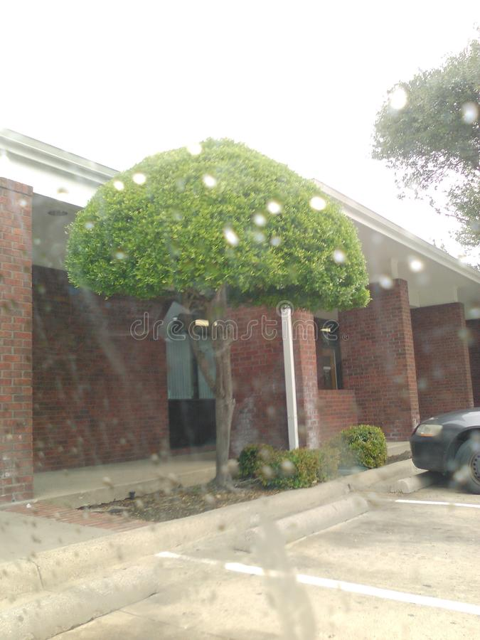 Träd i regnet arkivbild