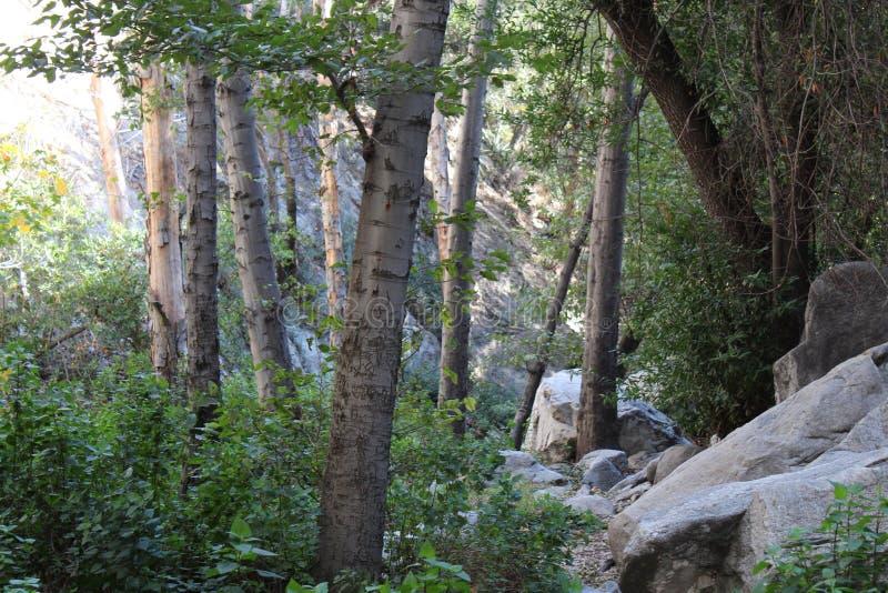 Träd i Rocky Place arkivbild
