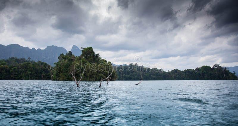 Träd i sjön royaltyfri foto