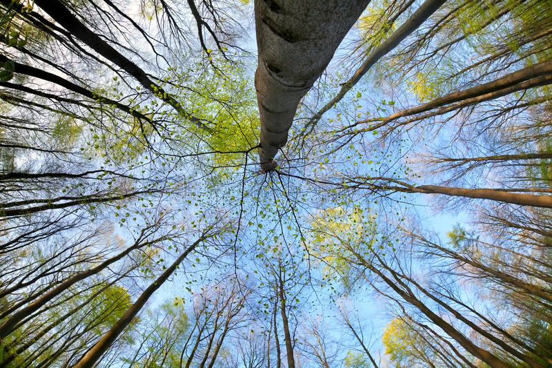 Träd i skog över blå himmel fotografering för bildbyråer