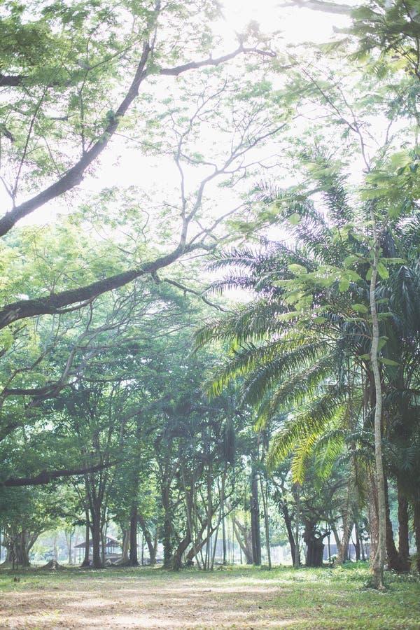Träd i skog under skugga av det jätte- trädet från nedersta sikt vara kan bruk till naturlig bakgrund, tapeten, mallen, screensav royaltyfri fotografi