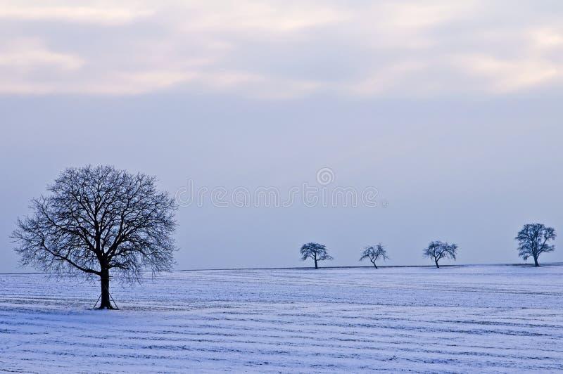 Träd i snö royaltyfri foto