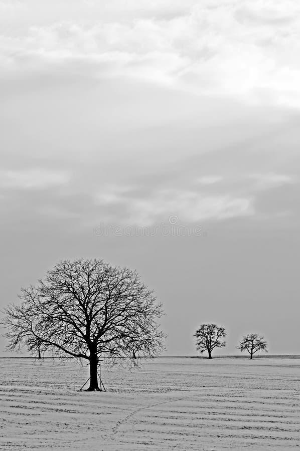 Träd i snö fotografering för bildbyråer