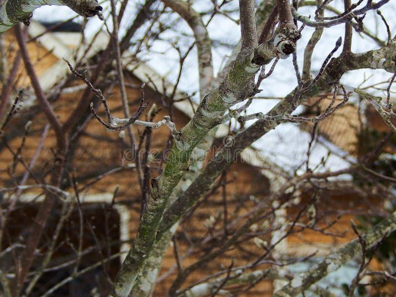 Träd i snön royaltyfria bilder