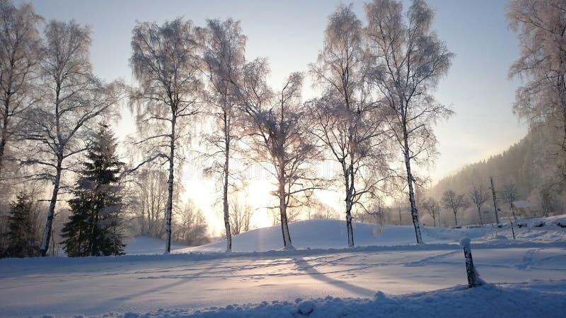 Träd i solen royaltyfri bild