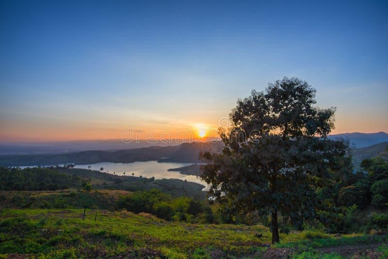Träd i solnedgångtid arkivbilder