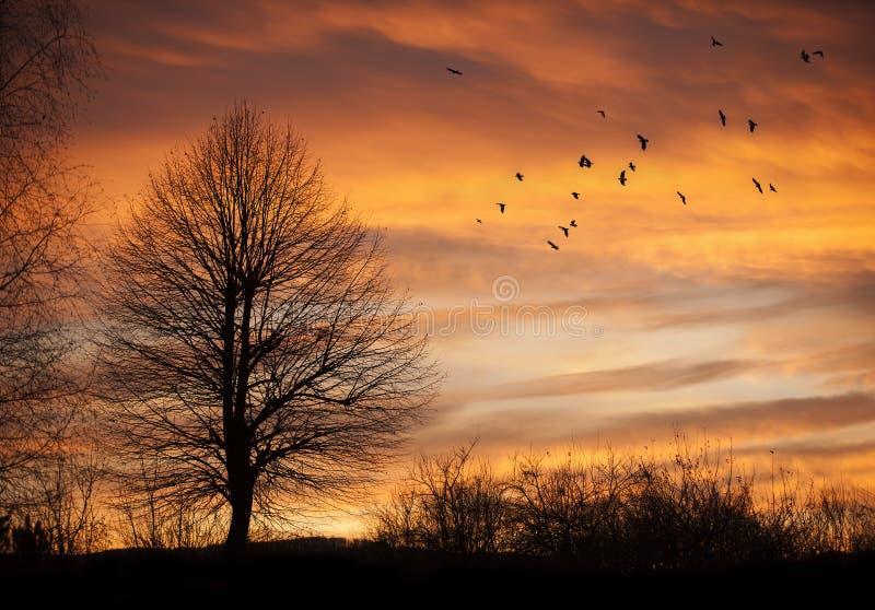 Träd i solnedgångtid med fåglar royaltyfri foto