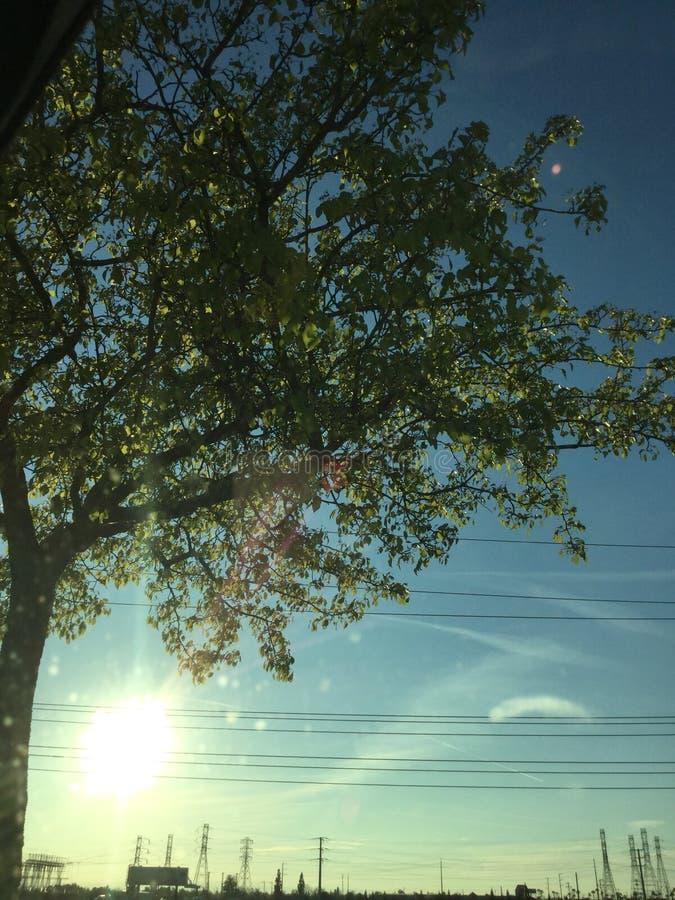 Träd i solskenet arkivfoton