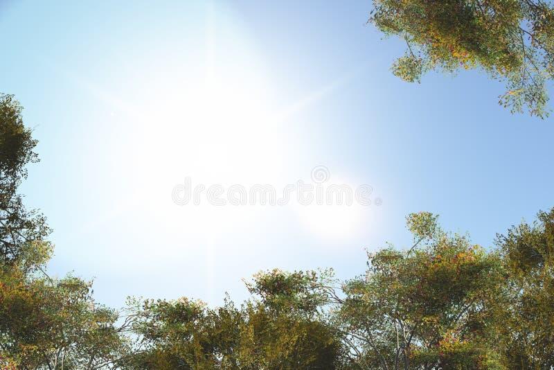 Träd i sommar arkivbilder
