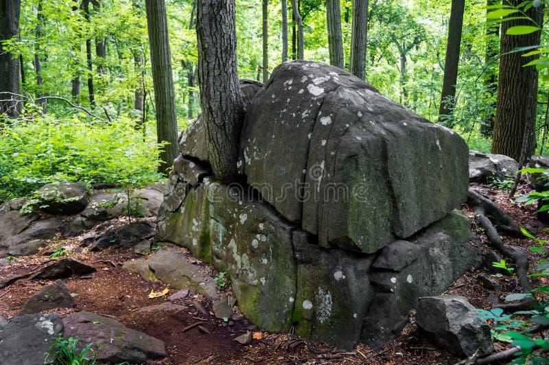 Träd i stenblock arkivbild
