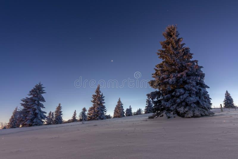 Träd i svart skog för snö arkivbild