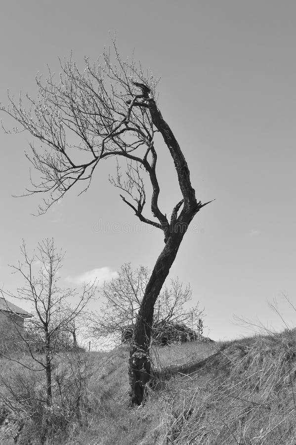 Träd i svartvitt vid ioannapapanikolaou royaltyfri foto