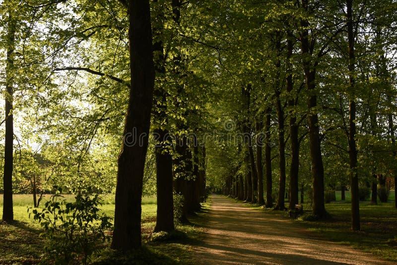 Träd i villan Varda Park royaltyfria bilder