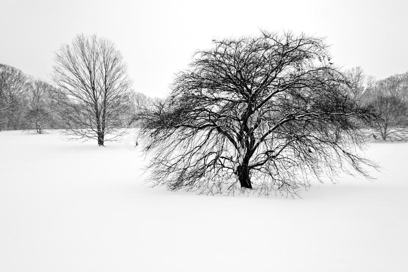 Träd i vinter 1 royaltyfri foto