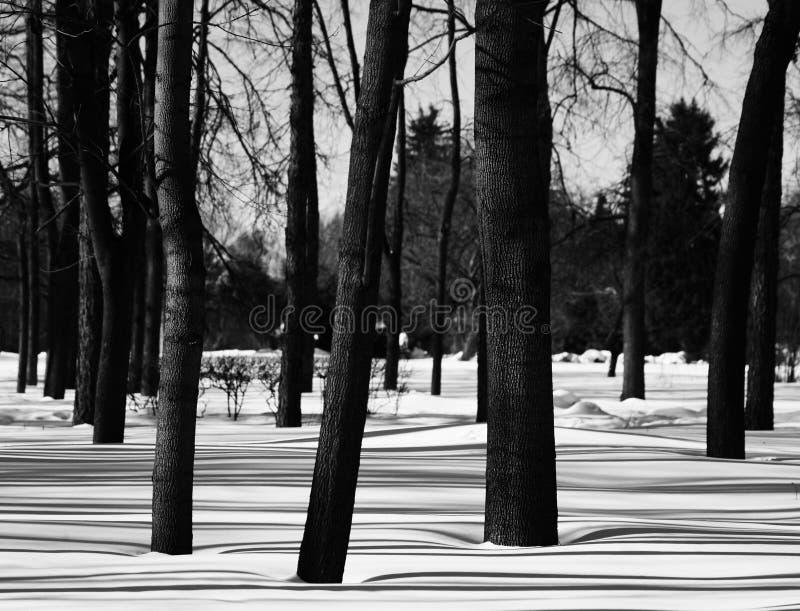 Träd i vinter parkerar bakgrund royaltyfria bilder