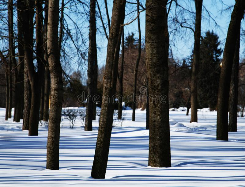 Träd i vinter parkerar bakgrund fotografering för bildbyråer