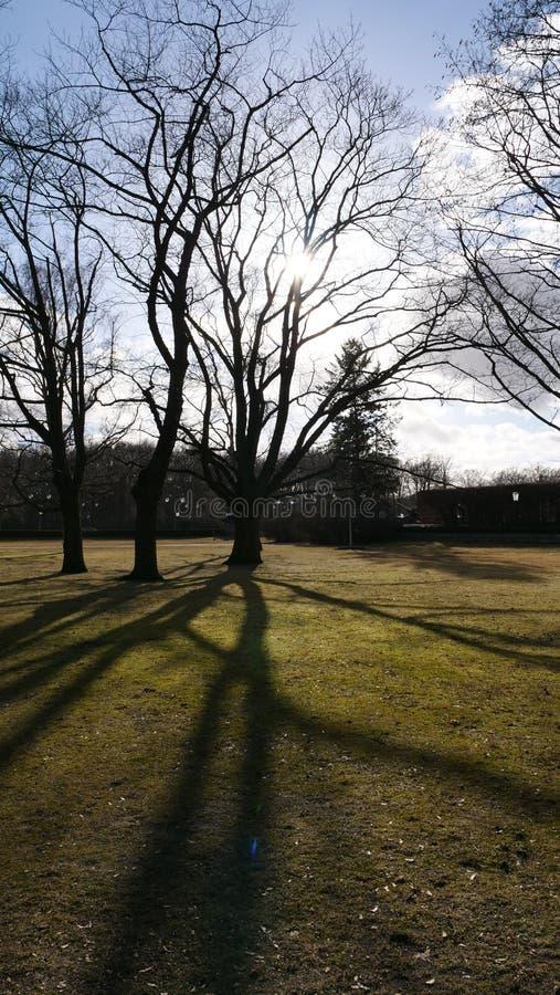 Träd i vintern på en solig dag royaltyfria foton