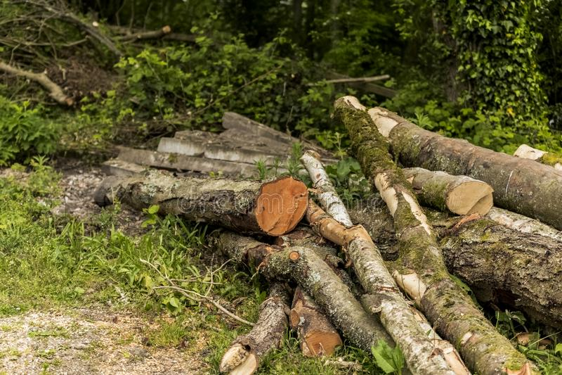 Träd klippte ner in i långt loggar in en hög royaltyfria foton