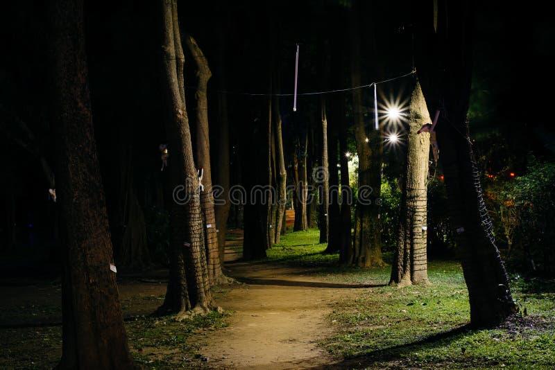 Träd längs en bana på natten, i Da'an parkerar, i Taipei, Taiwan royaltyfria bilder