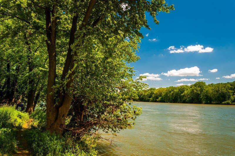 Träd längs Potomacet River på en solig vårdag arkivfoton