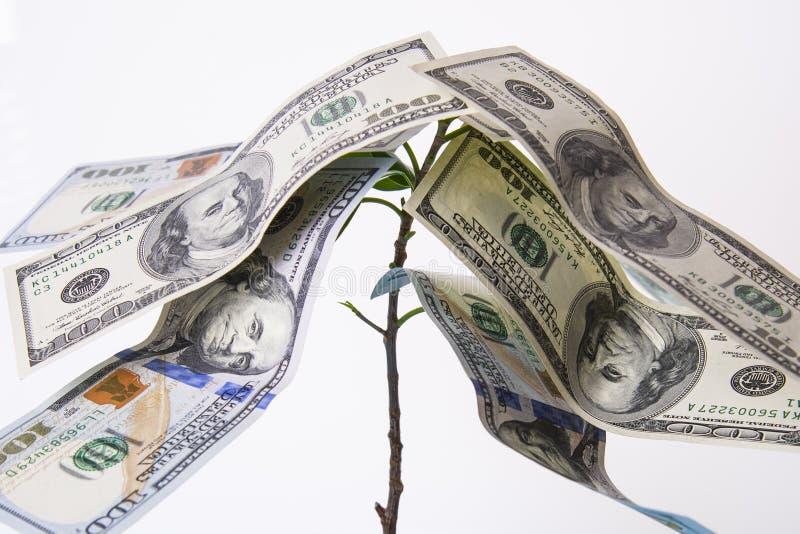 Träd med amerikanska dollar i stället för sidor Resninginkomst royaltyfri fotografi