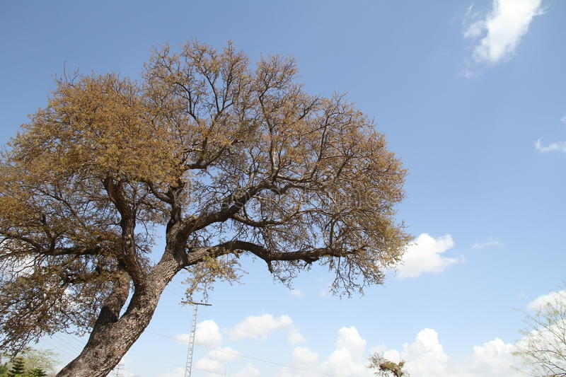 Träd med blå himmel och moln royaltyfri foto
