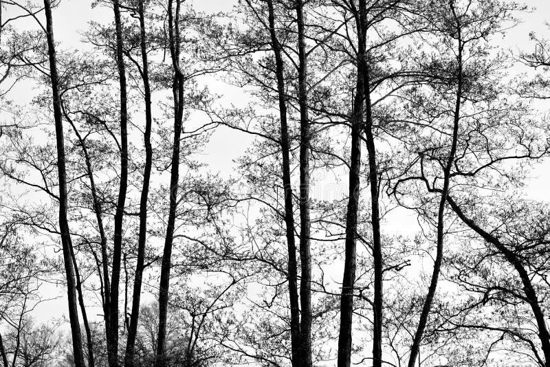 Träd med en bakgrundsträsko royaltyfri bild