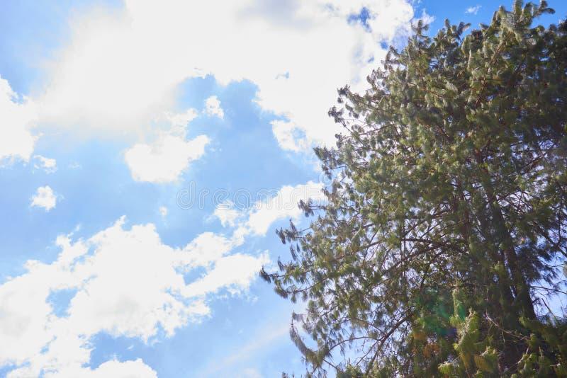 Träd med en blå himmel royaltyfria foton