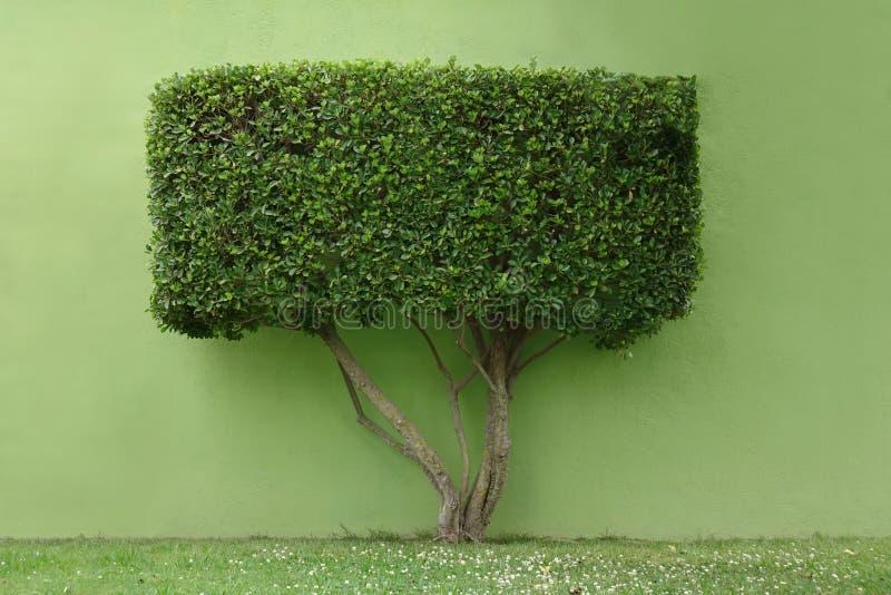 Träd med en rektangulär krona arkivfoton