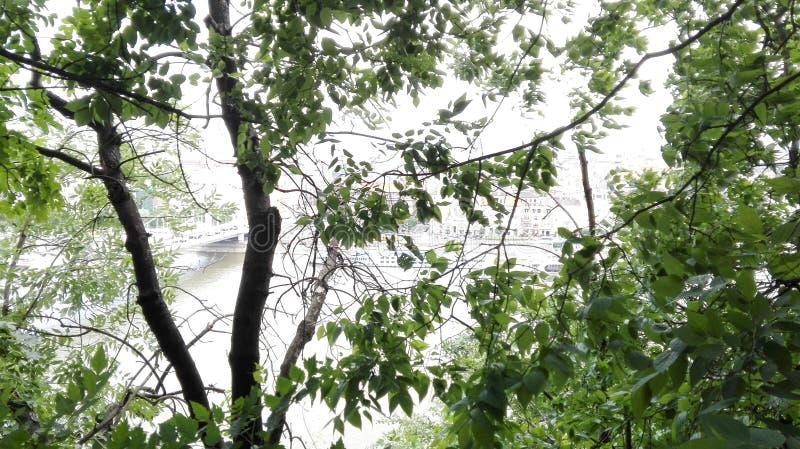 Träd med en sikt arkivbilder