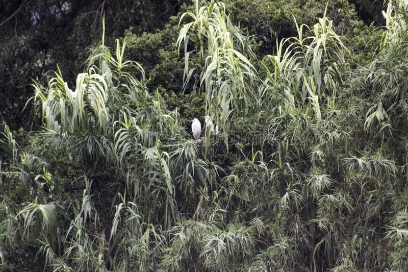 Träd med fågelredet fotografering för bildbyråer