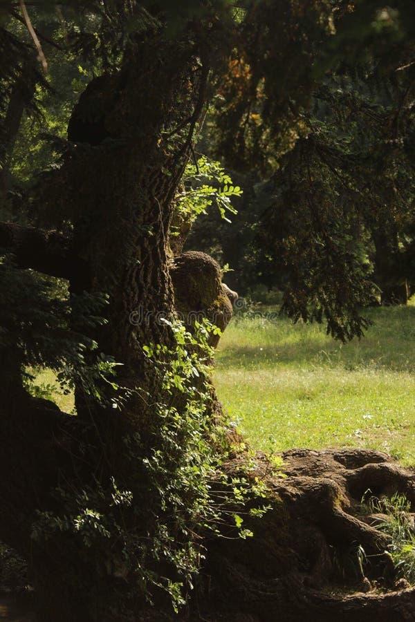 Träd med framsidan fotografering för bildbyråer
