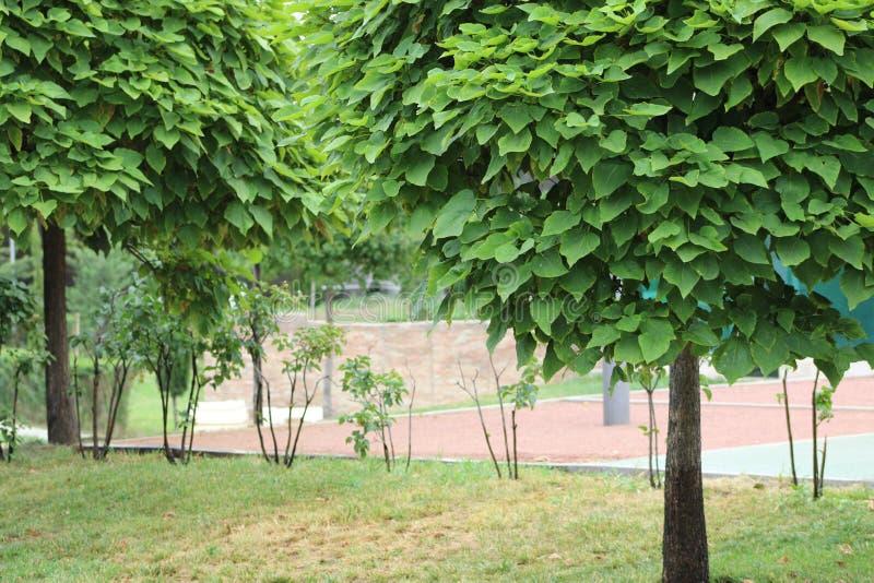 Träd med gröna sidor på dem fotografering för bildbyråer