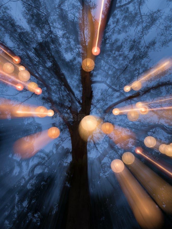 Träd med många lampor arkivbilder