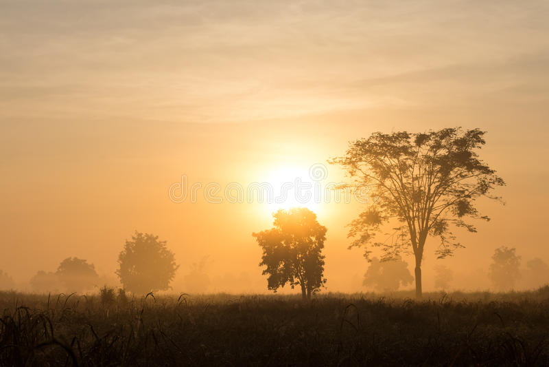 Träd med morgonmist royaltyfri bild