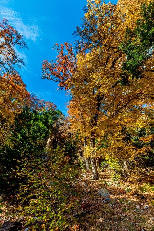 Träd med nedgånglövverk på den borttappade lönndelstatsparken arkivbild