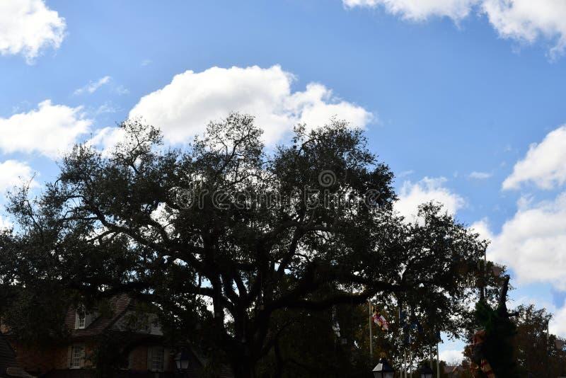 Träd med sikt av moln royaltyfria bilder