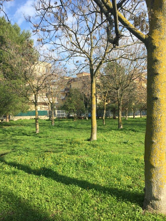 Träd med skuggor royaltyfri fotografi