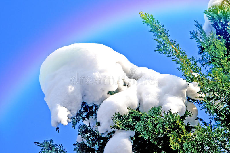 Träd med snö och regnbågen fotografering för bildbyråer