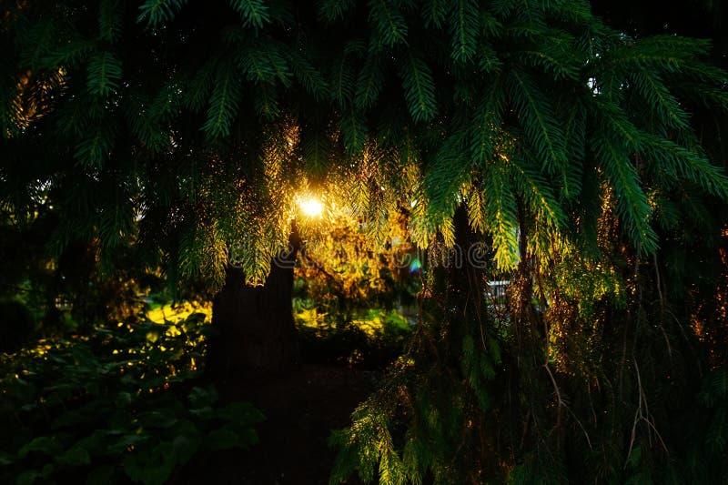 Träd med solljus i trädgård fotografering för bildbyråer