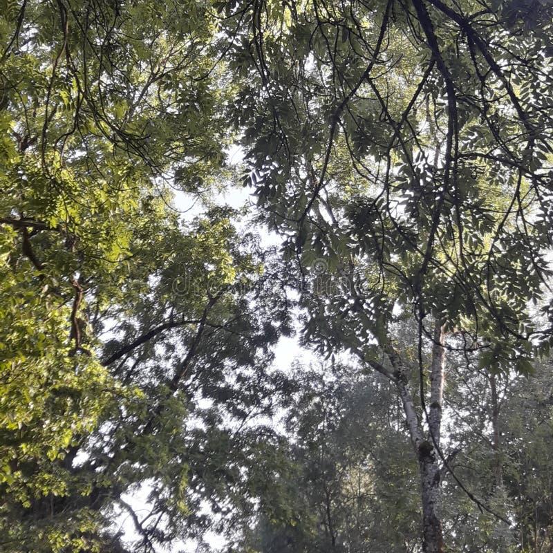 Träd med solskogdag royaltyfria foton