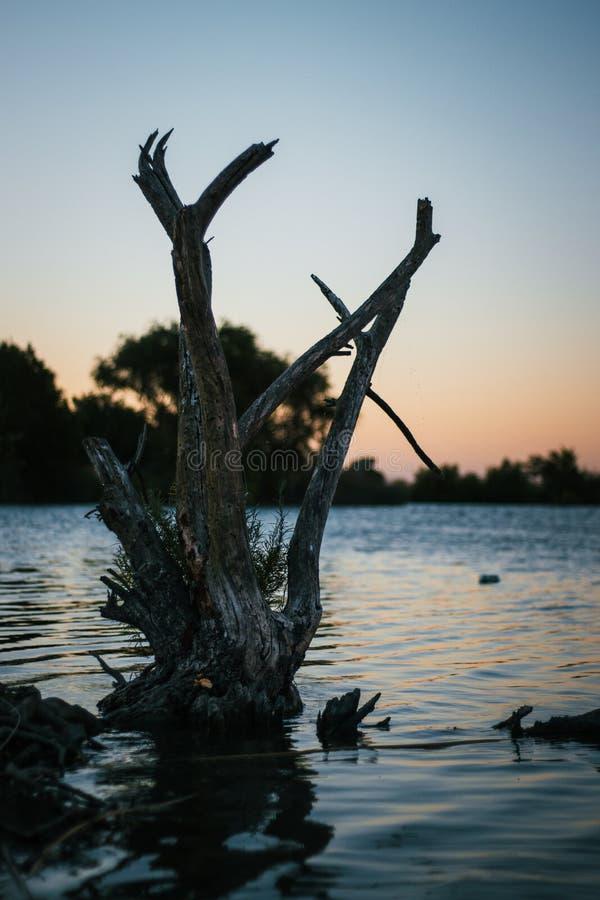 Träd med vatten och solnedgång royaltyfria foton