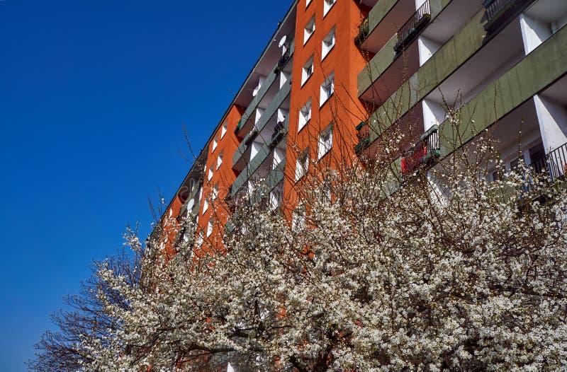 Träd med vita blommor på våren mot fasaden av en modern bostads- byggnad royaltyfri bild