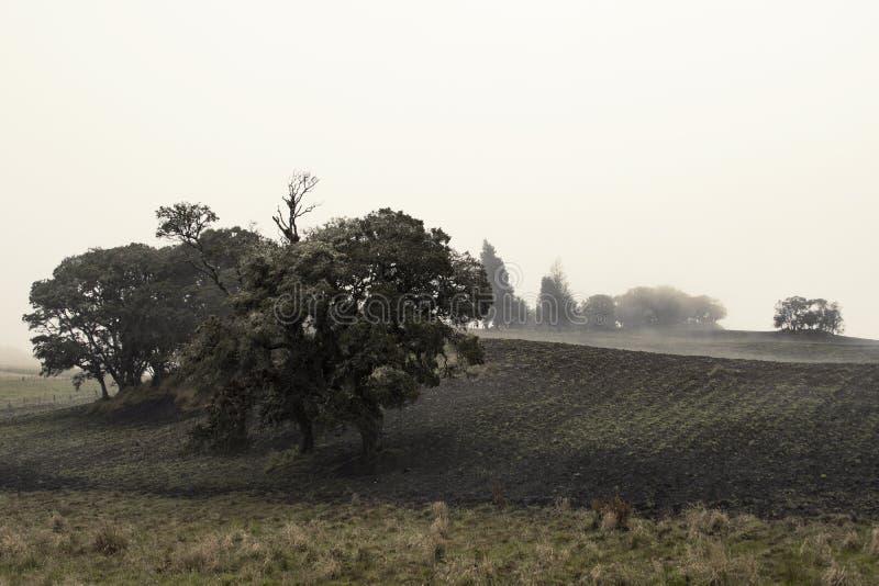 Träd mellan skördar arkivbilder