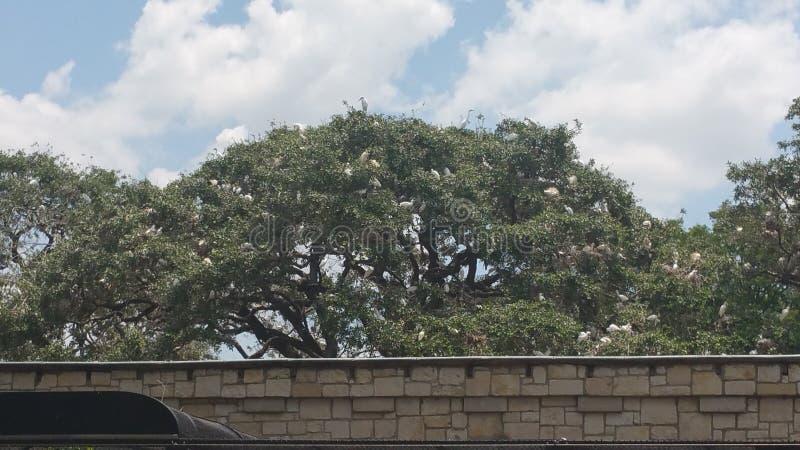 träd mycket av storkfåglar arkivbild