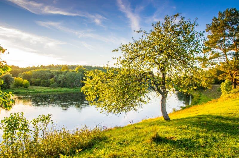 Träd nära floden, sceniskt naturlandskap royaltyfri bild