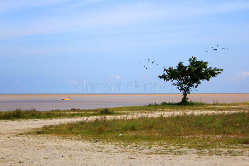 Träd nära stranden royaltyfria foton